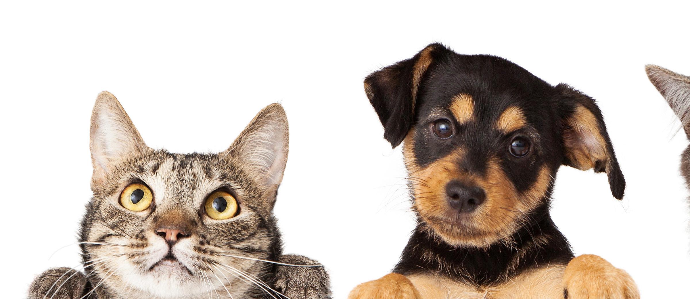 Chats et chiens soignés chez happyvet