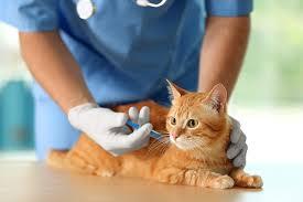 vaccination chat chez happyvet